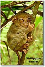 Philippine Tarsier - NEW Animal Wildlife POSTER