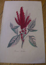 Antique, Princes Feather, Hand Colored Lithograph Print c.1856