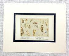 1855 Antique Print Seaweed Kelp Sea Creatures Marine Biology Chromolithograph