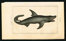 1844 Shark, Hand-Colored Antique Steel Engraving Print - Lacepede Nat.History