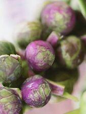 Légumes Chou de Bruxelles Rouge Taureau Environ 400 Graines