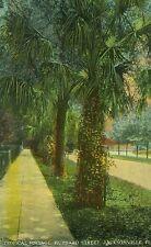 Tropical Foliage, Hubbard St.-Jacksonville, Fl-POSTCARD