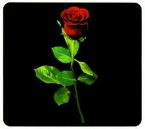 Herdabdeckplatte Rose schwarz Spritzschutz Motivplatte Wandblende Multiplatte
