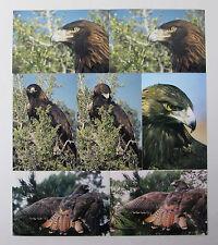 Mixed Lot of 7 Golden Eagle Photographs Bird of Prey 4 x 6 Color 1990s Photos