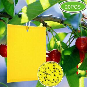 20 Gelbtafeln Gelbsticker Gelbtafel Fruchtfliegen Falle Insektenfalle Fliegen