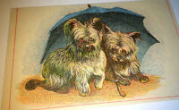 Antique Victorian Cute Dogs Under Umbrella! Clothing Co. Advertising Trade Card!