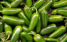 Pepper Seeds - JALAPENO CHILI - Warm, Burning Sensation When Eaten - 20 Seeds