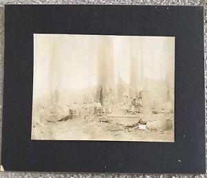 Vintage California Redwood Lumber Logging Steam Engine Line Photo Cabinet Card