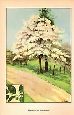 "1926 Vintage TREES ""FLOWERING DOGWOOD"" GORGEOUS COLOR Art Print Lithograph"