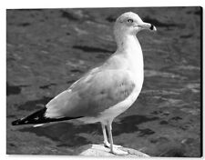 """Seagull And Water Black & White, 16""""x20"""", Metal Print"""