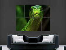 GREEN SNAKE REPTILE   ART WALL PICTURE POSTER  GIANT !!