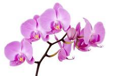 Adesivo Fiore Orchidea 28x28cm