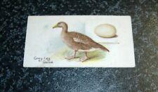 Lambert & Butler - Birds & Eggs No43 - Grey-Leg Goose