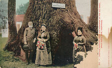 c1905 Gen. Fremont, Wife & Daughter, Santa Cruz, Ca Big Trees Postcard, Ub