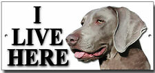 "WEIMARANER ""I LIVE HERE"" METAL SIGN,SECURITY,WARNING.PERSONALISED.DOG BREEDS."
