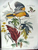 Singer: Chickadee with Orioles; New England plants