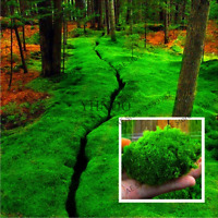 100 PCS Seeds Bonsai Moss Garden Green Plants Decorative Grass Free Shipping New
