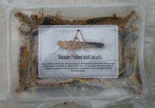 Vacuum Packed Adult Locusts (Reptile Food) 50