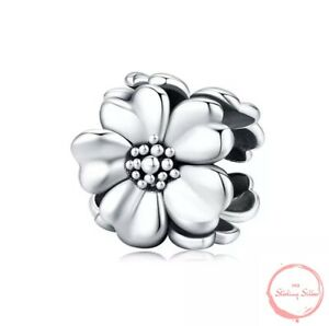 Charm Anhänger Daisy Blüte Blüten Blume Blumen Perle 925 Silber für Pandora NEU