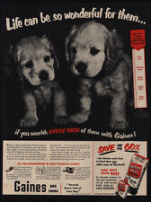 1951 Adorable COCKER SPANIEL Puppies - GAINES Meal Dog Food VINTAGE AD
