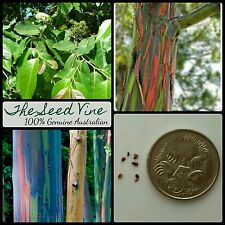 40+ RAINBOW EUCALYPTUS TREE SEEDS (Eucalyptus deglupta) Tropical Ornamental