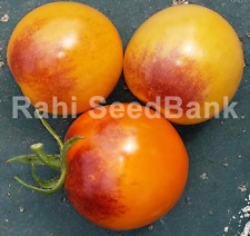 Blue Ambrosia Tomato - 10 Seeds!