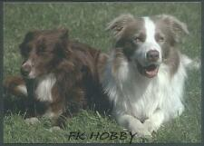 CPA Border Collie Dog Hound Pies Cane Perro Chiene z775