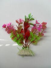 plante petite feuille