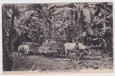 Costa Rica Postcard Hauling Bananas To Railway Track 1913 JBP