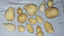Gourds Craft Varied Size Shapes Great Items 12
