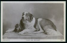 Collie dog guard small kitten tabby cat Dognity & Imudence 1910s photo postcard