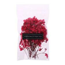 1 Bag Real Pressed Dried Flowers Floral Plants Scrapbooking Card Art Crafts