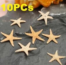 10PCs Mini Natural Starfish Shell Beach Sea Star Landscape Crafts Making Decor @