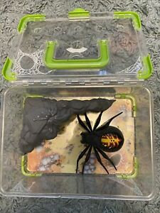 Wild Pets Moving Spider Lights Up & Sounds And Habitat Toy