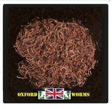 More details for 500g wormery compost worms with bedding culture from 'oxford-worms' dendrobaena