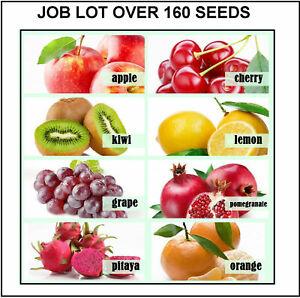 bulk lot Mix Fruit tree Seeds Cherry Pitaya Lemon Grape Pom Apple Kiwi Orange
