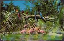 (v3i) Miami FL: Parrot Jungle, Flamingos and Macaws