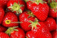 Strawberry Lip Balm Flavor Oil