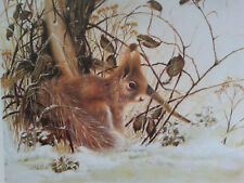Jane Neville. Limited edition print of a Red Squirrel. Unframed.