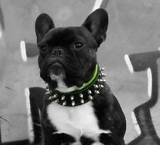 BESTIA hand made leather dog collar, XXS to XXL, spiked. studded. french bulldog