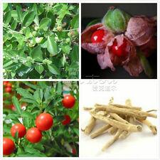 100 Ashwagandha Seeds High Germination Easy to grow  TT405