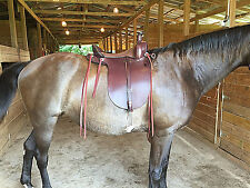 Amish Plantation Gaited Saddle Field Trial Endurance Trail, Wide Tree, 22 lb