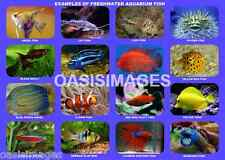FRESHWATER AQUARIUM FISH EDUCATIONAL POSTER  Quality Photo print A4, or A5