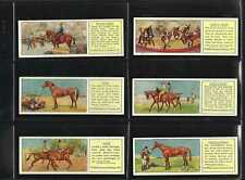 More details for typhoo - horses - full set of 25 cards