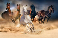 BEAUTIFUL HORSE CANVAS PICTURE #53 STUNNING A1 WILD HORSES CANVAS FREE P&P