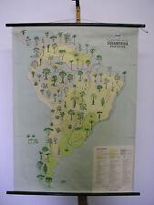 Scheda crocifissi America 86 plants vegetazione 6,5mio scheda 87x117cm Mappa Muro Map