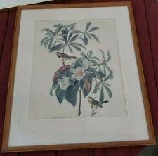 Vintage Framed Matted Print Bachman's Warbler Drawn by JJ Audubon No 37 Birds