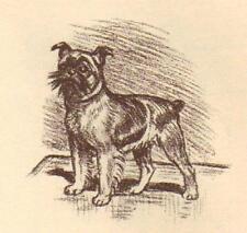 Brussels Griffon - Vintage Dog Print - 1954 Megargee