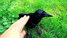 HOME MOVIES - MAN & HIS CROWS - 16mm