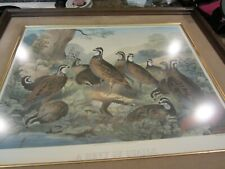 """Lithograph """"Bevy of Quails by J.S. Hill 1862"""